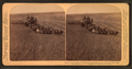 Evolution of sickle and flail, 33 horse team harvester, cutting, threshing and sacking wheat, Walla Walla, Washington, from Robert N. Dennis collection of stereoscopic views 3.png
