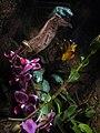 Exotic Frog (3479420695).jpg