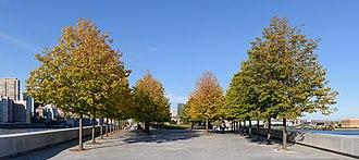 Franklin D. Roosevelt Four Freedoms Park - Little-leaf linden allée