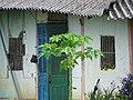 Facade of Rural Dwelling - Muong Thanh Valley - Dien Bien Phu - Vietnam (48178463196).jpg