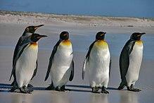 пингвин это млекопитающее или нет