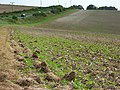 Farmland, Charlton Down - geograph.org.uk - 540206.jpg
