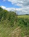 Farmland alongside the A46 - geograph.org.uk - 899264.jpg