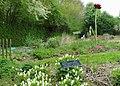 Fausse fumetère blanche Bailleul jardin botanique.jpg