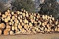 Felled Bark Beetle Trees (38866410732).jpg