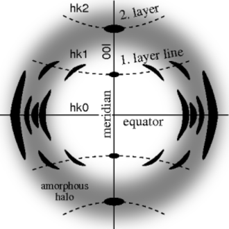 Fiber diffraction - Ideal fiber diffraction pattern of a semi-crystalline material with amorphous halo and reflexions on layer lines. High intensity is represented by dark color. The fiber axis is vertical