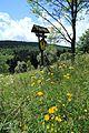 Fichtelbergwiesen im Erzgebirge, Sachsen...2H1A2343WI.jpg