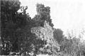 Fig 44, castello di lesa, angolo sud est, p155, foto nigra, nigra il novarese.jpg