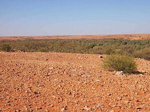 Gallery forest - Gallery forest in gibber desert, Finke River floodout, Central Australia