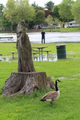 Fisherman, Canada Goose, and Carving at Lions Park in Fox River Grove, IL.png