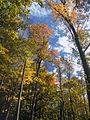 Flickr - Nicholas T - Open Canopy (1).jpg