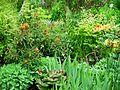 Flickr - brewbooks - Our Garden (28).jpg