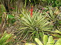 Flickr - brewbooks - Paloma gardens (8).jpg
