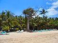 Flickr - ronsaunders47 - EMPTY BEDS. DOMINICAN REPUBLIC..jpg