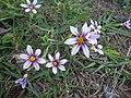 Flores do campo no parque.jpg