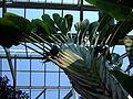 Flower-center141912.jpg