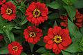 Flower (4429062920).jpg