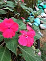 Flower 14 HDR.jpg