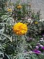Flower Pic.jpg