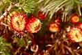Flowers (3042842500).jpg