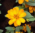 Flowers - Uncategorised Garden plants 94.JPG