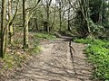 Footpath crossing in Access land wood - geograph.org.uk - 1815789.jpg