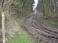 Footpath through Markwells Wood - geograph.org.uk - 353940.jpg