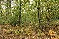 Forêt Départementale de Méridon à Chevreuse le 29 septembre 2017 - 26.jpg