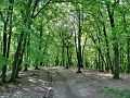 Forest - panoramio - paulnasca (11).jpg