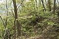 Forest in Mt.Nabeashi 02.jpg