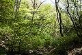 Forest in Mt.Nabeashi 07.jpg
