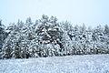 Forest near Ob river in Altai Region 14.JPG