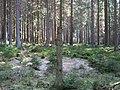 Forest near the Große Bode 08.jpg