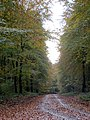 Forest road - Collingbourne Wood - Nov 2012 - panoramio.jpg