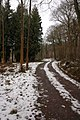 Forest track through Burghope Wood - geograph.org.uk - 336104.jpg