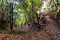 Foresta sentiero degli dei.jpg