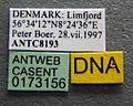 Formica cinerea casent0173156 label 1.jpg