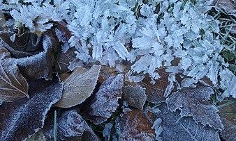 Fractal Frost in December 2016, France, near Pontcharra.jpg