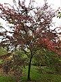 Frontier autumn colour.jpg