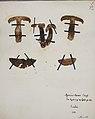 Fungi agaricus seriesI 040.jpg