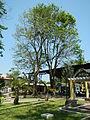 FvfMariaAurora7524 06.JPG