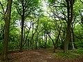GOC Tring & Wendover Woods 026 Northill Wood, Buckland (33947205403).jpg