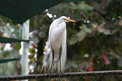 Garça no Zoológico de São Paulo.jpg