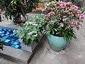 Garden Court - US Botanic Gardens 01.jpg