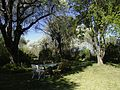 Garden at 38 Bree Street - Cradock-001.jpg