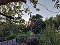 Garden with branches July 18 2021.jpg
