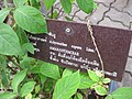 Gardenology.org-IMG 7925 qsbg11mar.jpg