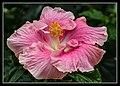 Gardens by the Marina Bay - Dome Flowers-05 (8323750712).jpg