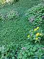 Gardens in Baghdad 47.jpg