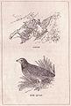 Geese and Quail.jpg